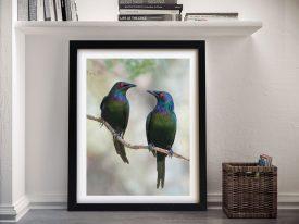 Beautiful Couple Australian Starlings Art
