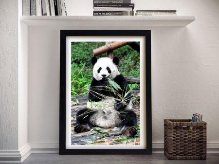 Framed Wall Art Of A Giant Panda