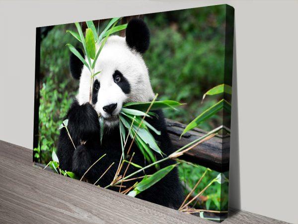 Buy Giant Panda ll Cheap Wall Art Australia