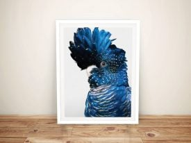 Buy A Framed Print of a Black Cockatoo