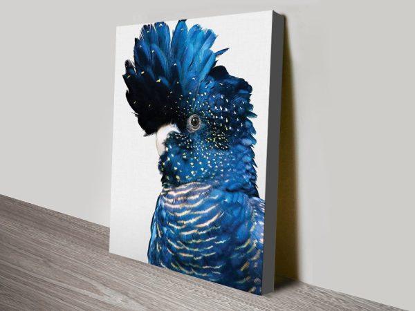 Buy Black Cockatoo Australian Birds Wall Art