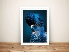 Buy Black Cockatoo II Gorgeous Bird Wall Art