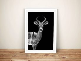 Buy A Print of an Antelope by Hugonnard