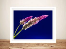 Tipped in Pink Natural World Canvas Wall Art