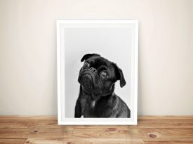 Buy a Framed Canvas Print of a Sweet Pug