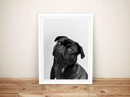 Buy a Framed Canvas Print of a Sweet Pug