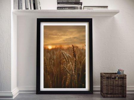 Buy a Print of Barley Sunset Stunning Artwork