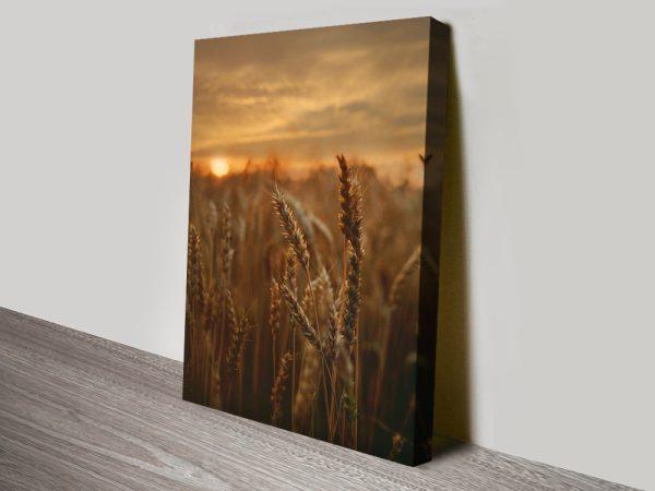Buy a Print of Barley Sunset Cheap Wall Art AU
