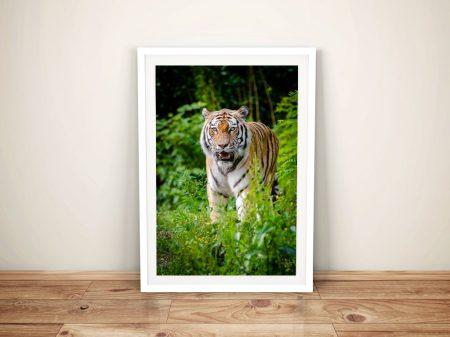 Buy Tiger Amongst the Undergrowth Framed Art