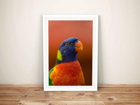 Buy Colourful Parakeet Framed Canvas Wall Art