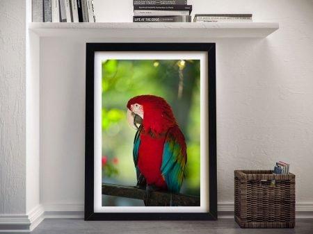 Buy a Colourful Parrot Canvas Print Online