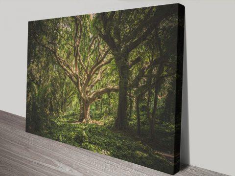 Buy Hawaii Treescape Amazing Gift Ideas AU