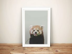 Buy a Cheeky Red Panda Cub Framed Print