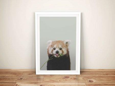 Buy a Cheeky Red Panda Cub Framed Print