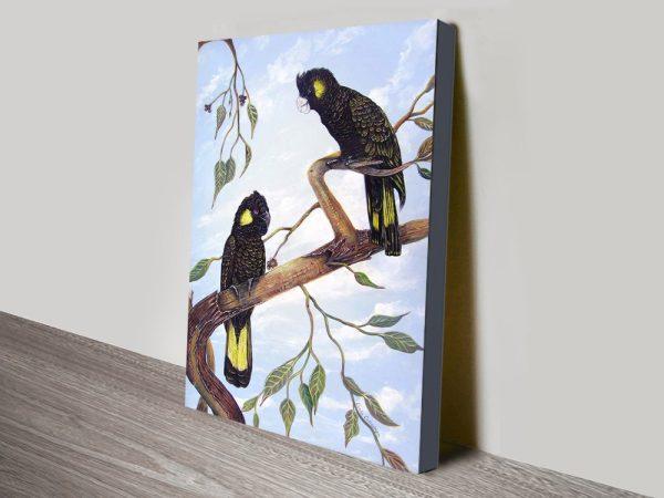 Buy a Framed Canvas Print of Black Cockatoos