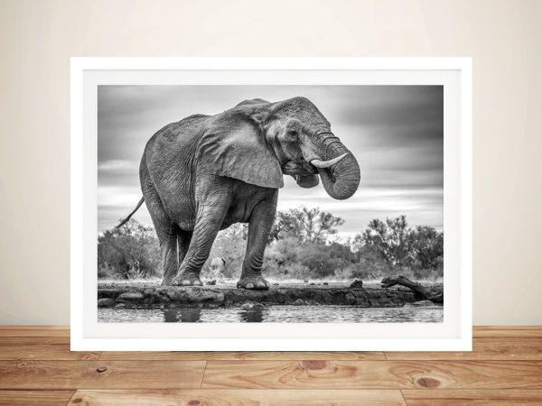 Buy Majestic Elephant Wall Art Cheap Online