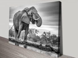 Buy a Black & White Standing Proud Print