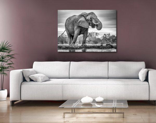 Buy Affordable Wildlife Framed Canvas Art AU