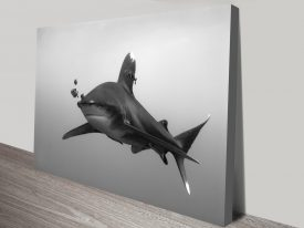 Buy Elegant Danger Shark Photography Art