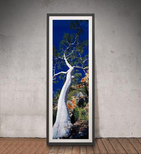 Buy Ghost Gum Peter Lik Art Great Gift Ideas AU