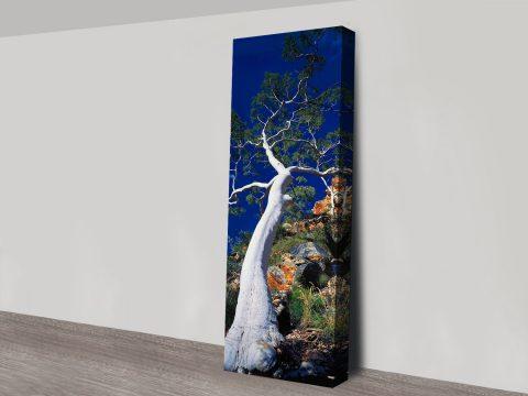 Buy Ghost Gum Framed Panoramic Artwork