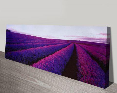 Lavender Field Canvas Art Prints