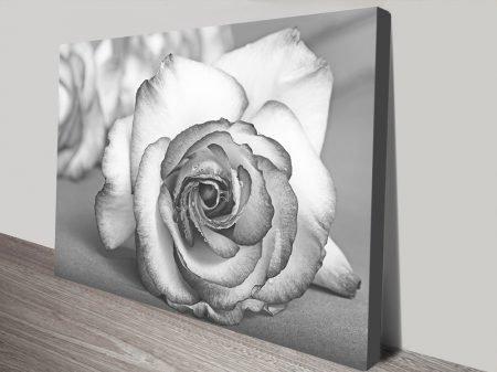 Buy a Framed Floral Black & White Rose Print