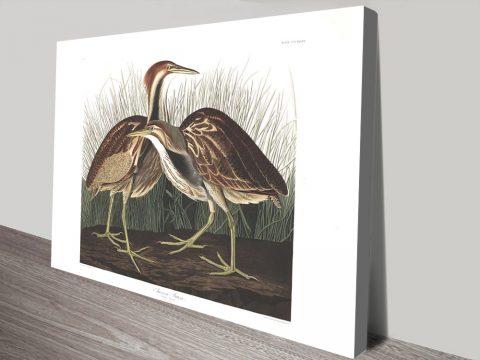 American Bittern Audubon Classic Wall Art