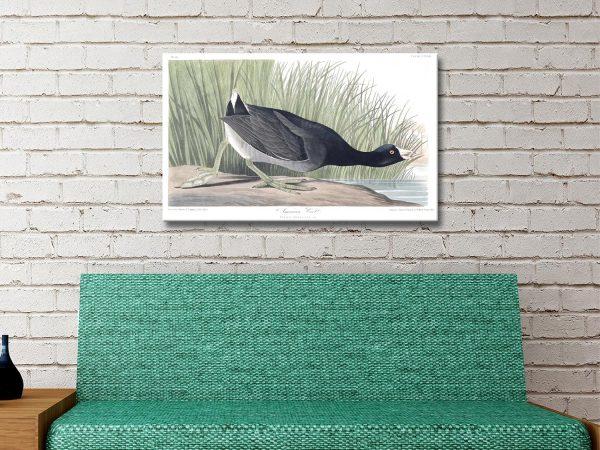 Audubon Bird Wall Art Prints Great Gifts AU