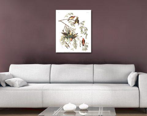 Audubon Classic Bird Prints Great Gift Ideas AU