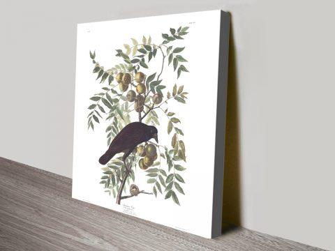 American Crow Ready to Hang Audubon Art