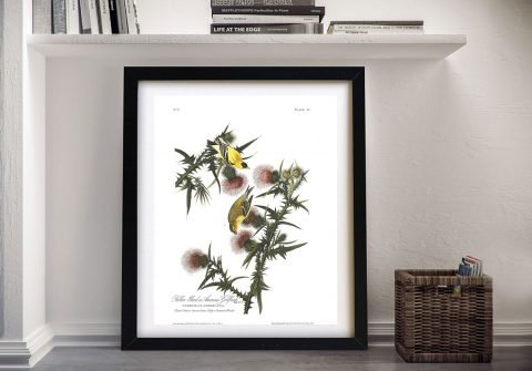 American Goldfinch Print Gift Ideas Online