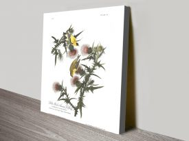 Buy an American Goldfinch Print on Canvas