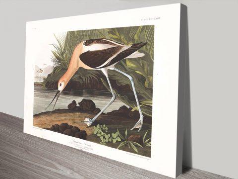 Get Affordable Wildlife Wall Art by Audubon