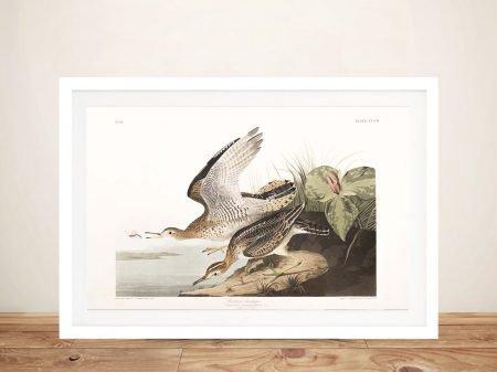 Classic Audubon Bartrum Sandpiper Artwork