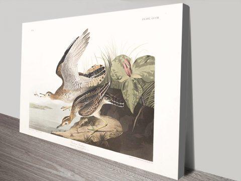 John James Audubon Wild Bird Wall Art AU