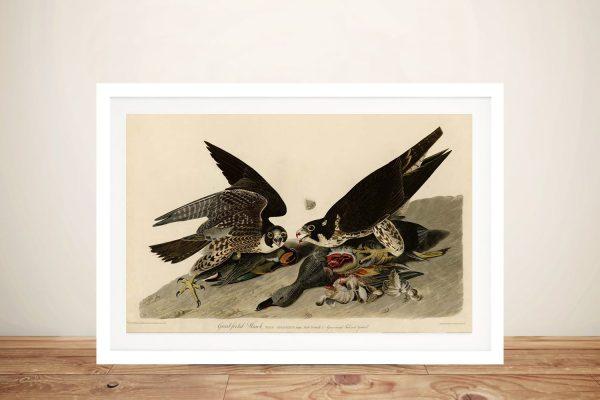 Audubon Canvas Print of Great Footed Hawk