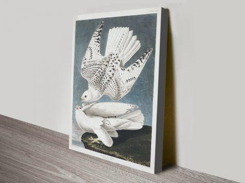 Jer Falcon Classic Wildlife Print on Canvas