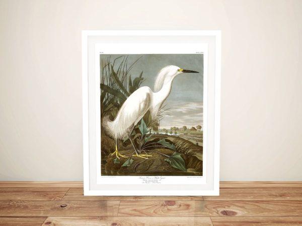 Buy a Snowy Heron Audubon Canvas Print