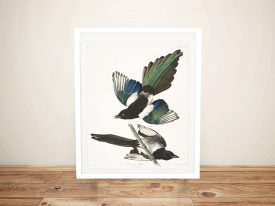 Buy a Print of American Magpie by Audubon