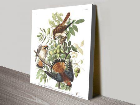 American Sparrow Hawk Print on Canvas
