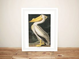 Buy a Framed Print of American White Pelican