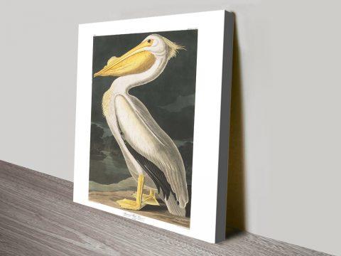 American White Pelican Print by Audubon