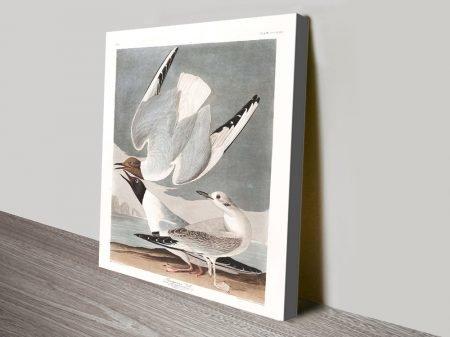 Artic Tern Classic Wildlife Wall Art Prints