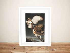 Barn Owl Canvas Wall Art by Audubon
