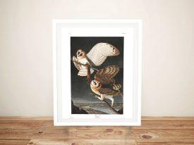 Barn Owl Canvas Wall Art by Audubon