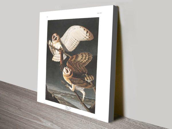 Barn Owl Affordable Classic Wall Art Online