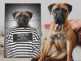 The Convict Hilarious Pet Portraits Custom Made