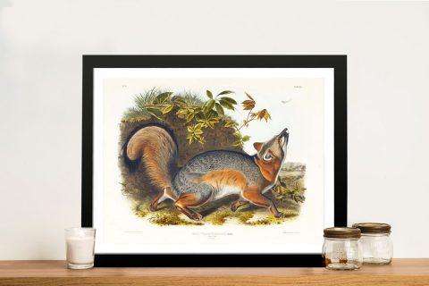 Framed Grey Fox Stretched Canvas Print