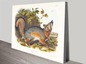 Buy Grey Fox Audubon Wildlife Wall Art